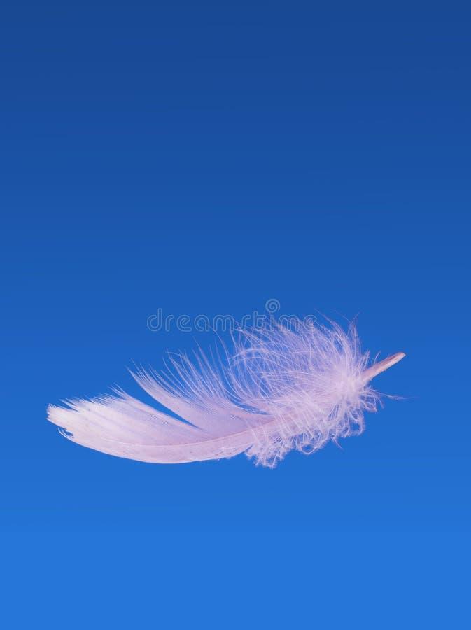 失重浮动蓬松的羽毛-,软性和光 库存照片
