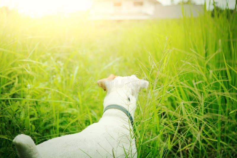 失去的狗发现它的房子 宠物和动物 免版税库存照片
