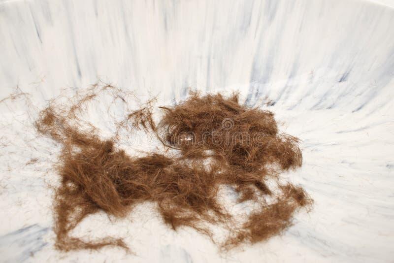 头发水槽 免版税库存照片