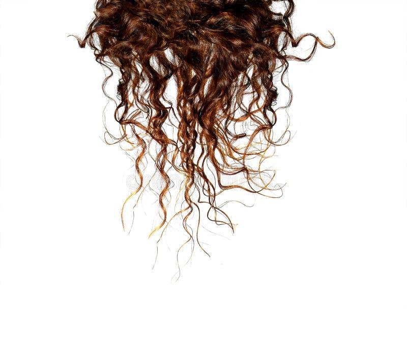头发,隔绝在白色 库存图片
