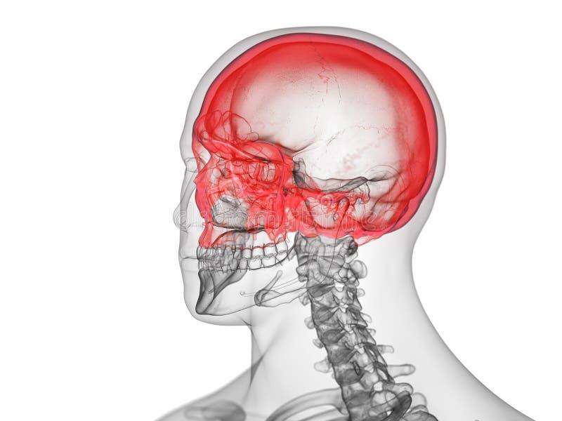 头盖骨 向量例证