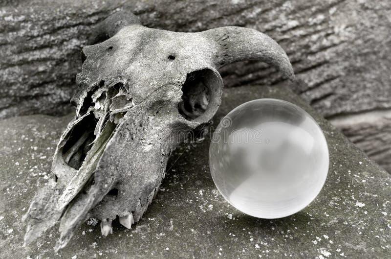 头骨和水晶球 免版税库存照片