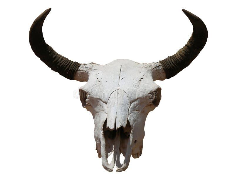 Download 头骨 库存照片. 图片 包括有 西南, 对象, 母牛, 垫铁, 本质, 敌意, 头骨, 查出, 操舵, 西部 - 189862