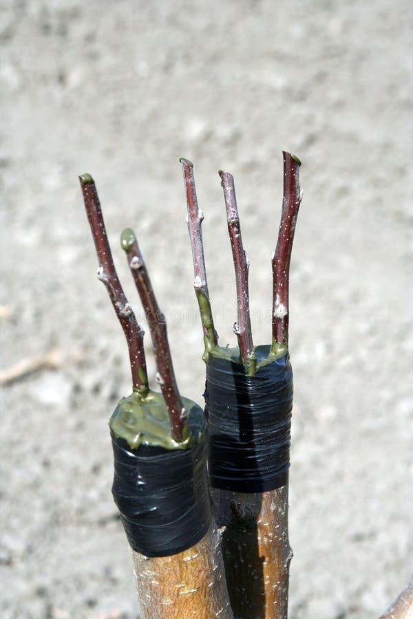 夹子结构树 免版税库存图片