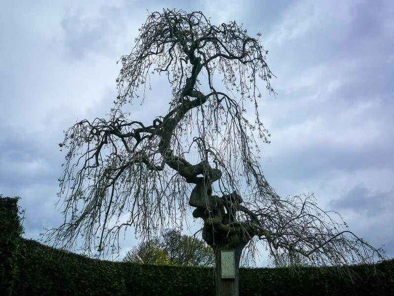 奇怪的形状的树在公园 图库摄影