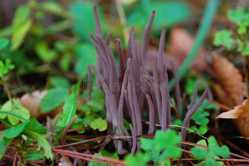 奇怪的蘑菇 图库摄影
