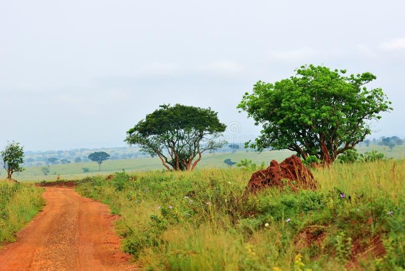 默奇森Falls国家公园,乌干达 库存图片