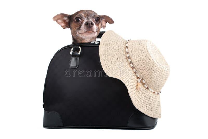 奇瓦瓦狗周末逃走袋子 库存图片