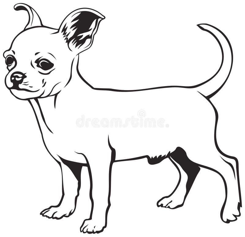 奇瓦瓦狗狗品种 皇族释放例证