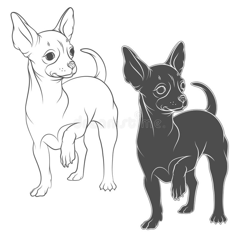 奇瓦瓦狗的传染媒介图画 皇族释放例证