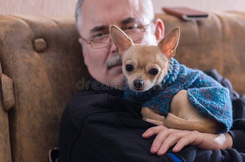 奇瓦瓦狗画象与大师的使用作为枕头的那条聪明的狗 免版税库存图片