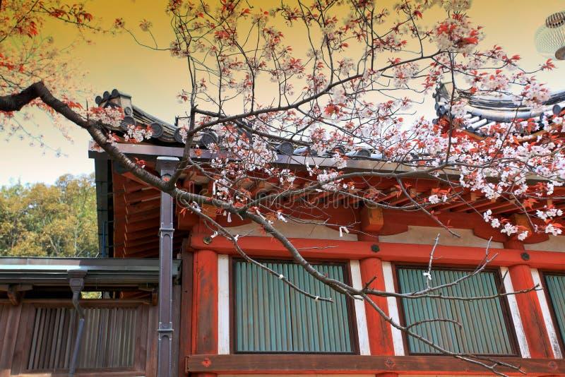奈良公园,日本 免版税图库摄影