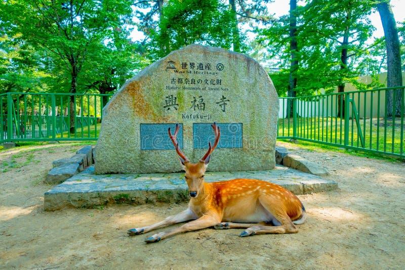 奈良,日本- 2017年7月26日:休息在情报前面的奈良公园的美丽的野生鹿在奈良签到石, 免版税库存图片