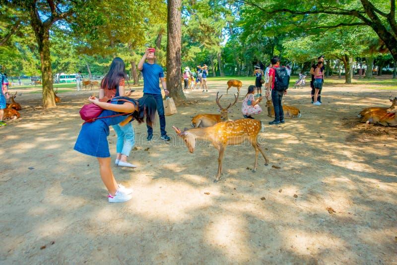奈良,日本- 2017年7月26日:穿斜纹布礼服的未认出的妇女,使用与一些野生鹿在奈良,日本 奈良 库存照片