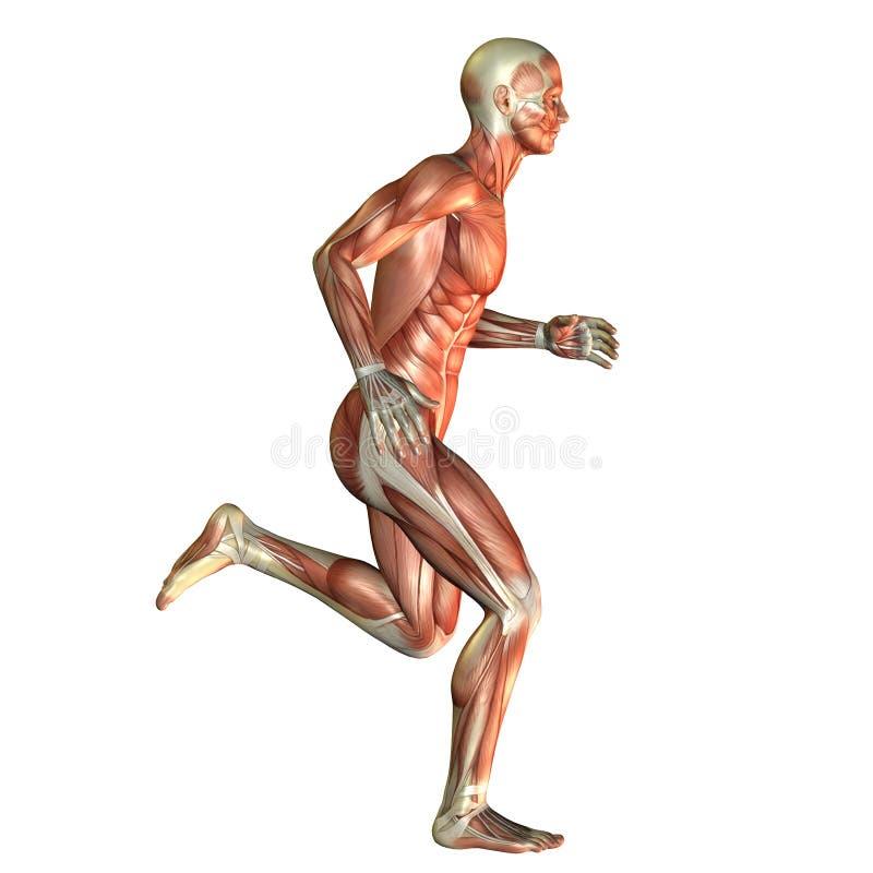 奔跑的肌肉人 向量例证