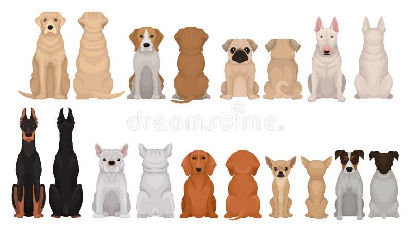 套不同的品种、前面和后面看法狗  逗人喜爱的家畜 家庭宠物 动物园海报的平的传染媒介  向量例证