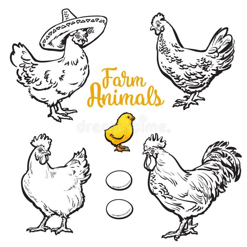 套不同的鸡 库存例证