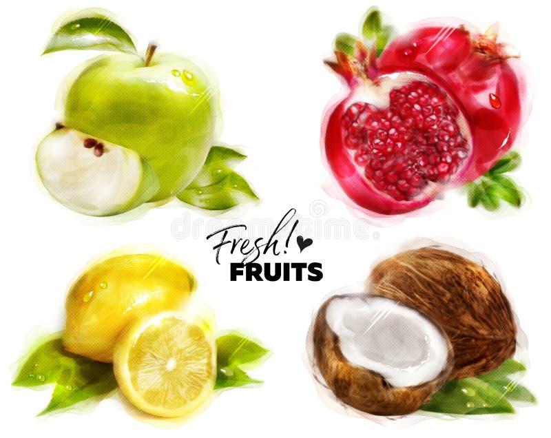 套与美好的小点纸纹理的水彩新鲜水果 向量例证
