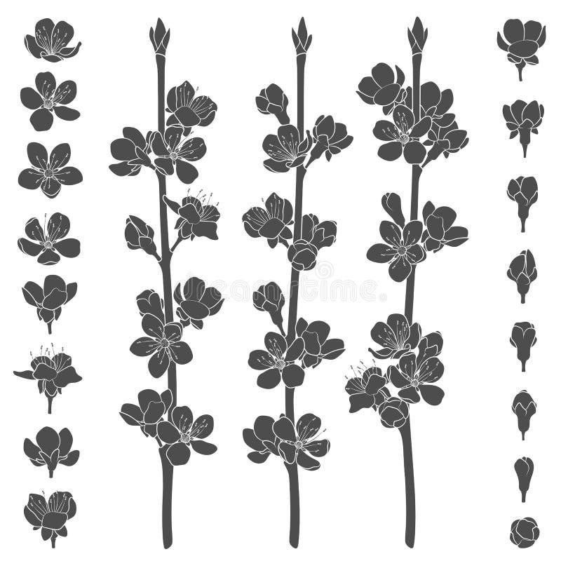 套与进展的春天的黑白图象分支 被隔绝的传染媒介对象 向量例证