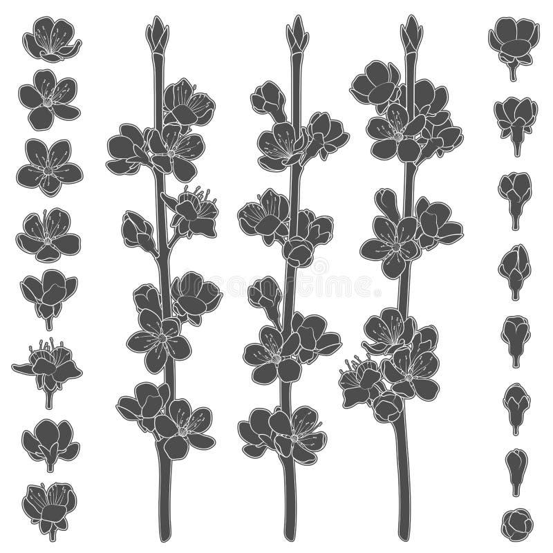套与进展的春天的黑白图象分支 被隔绝的传染媒介对象 皇族释放例证