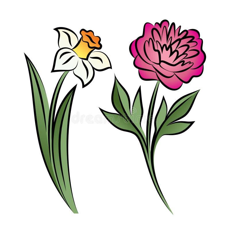 套两朵被概述的花 牡丹和水仙 向量例证