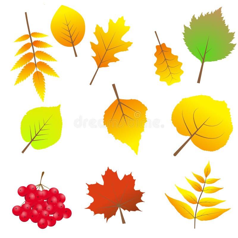 套五颜六色的秋叶 在空白背景 皇族释放例证