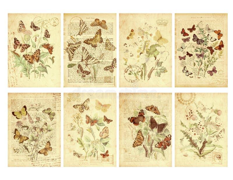 套八个葡萄酒样式蝴蝶标签 库存例证