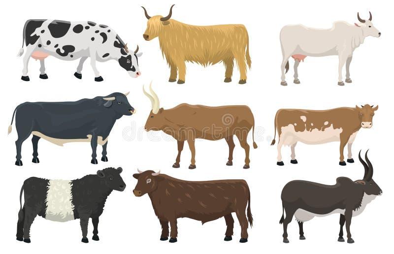 套公牛和母牛牲口牛哺乳动物的自然发牢骚农业和家养的农村迟钝的有角的动画片水牛 皇族释放例证