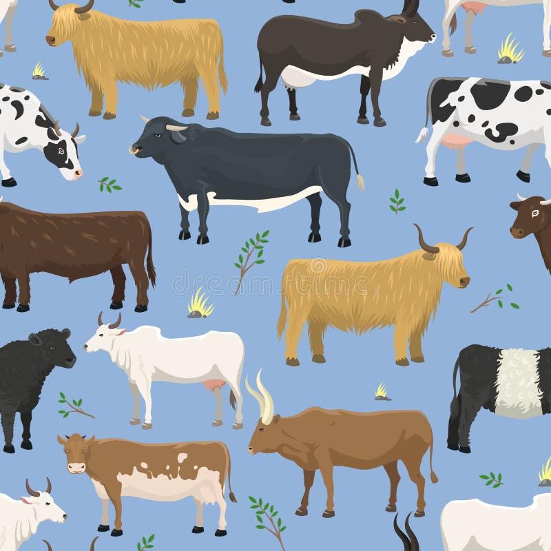 套公牛和母牛牲口牛哺乳动物的自然发牢骚农业和家养的农村迟钝的有角的动画片水牛 库存例证
