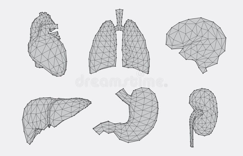 套几何解剖学 库存例证