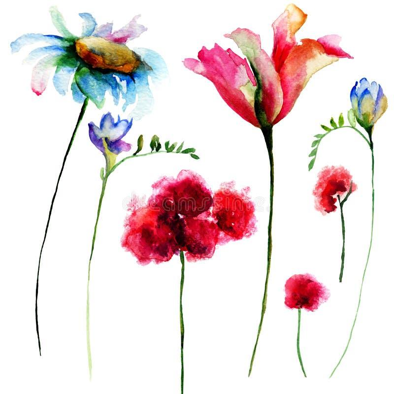 套原始的水彩花 向量例证