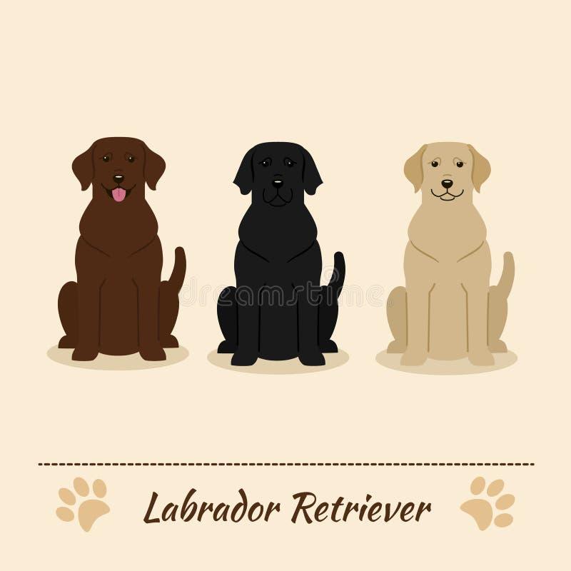 套另外颜色拉布拉多猎犬 皇族释放例证