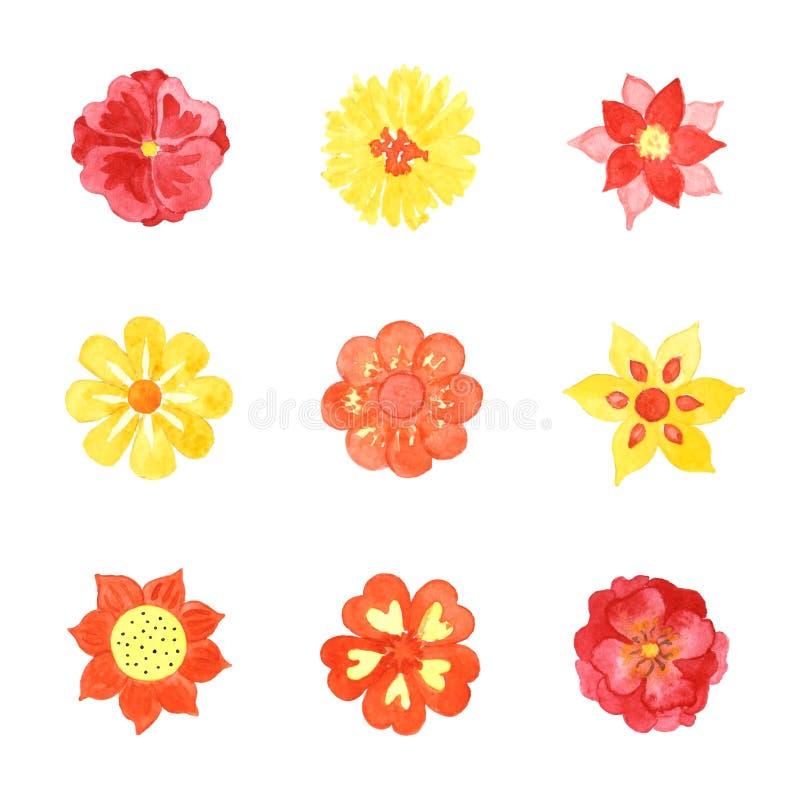 套各种各样的在白色隔绝的水彩开花的花 向量例证