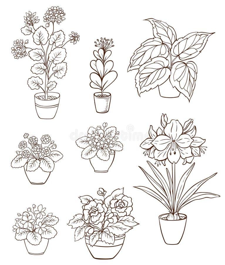 套各种各样的室内植物 向量例证
