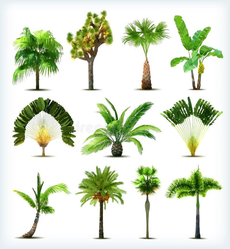 套各种各样的棕榈树。传染媒介 皇族释放例证