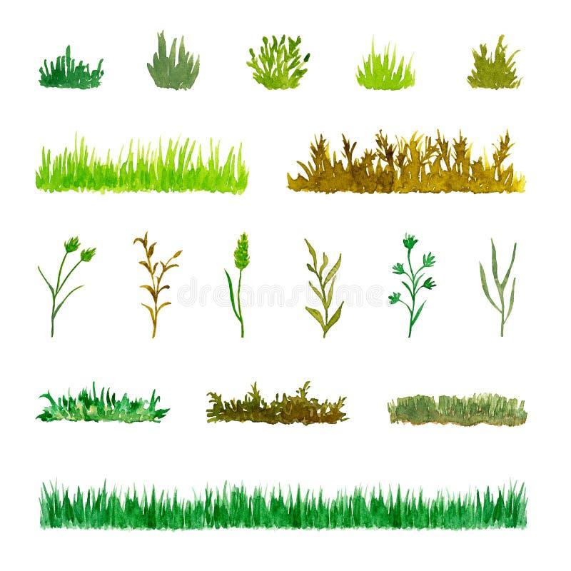 套各种各样的植物元素草,灌木,词根,手拉和被绘的水彩 向量例证