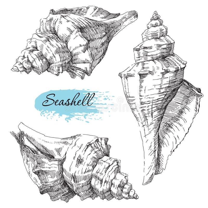 套各种各样的海壳 向量例证
