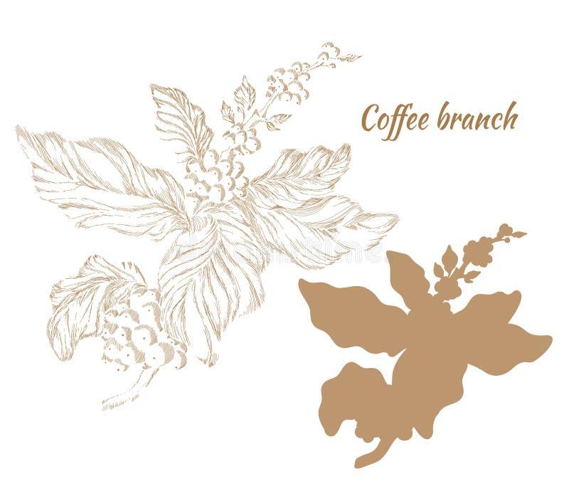 套机械树叶子与分支和豆的焦作市v机械咖啡设计师图片