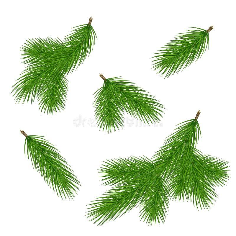 套圣诞节设计的杉木分支 在现实s的杉木 皇族释放例证