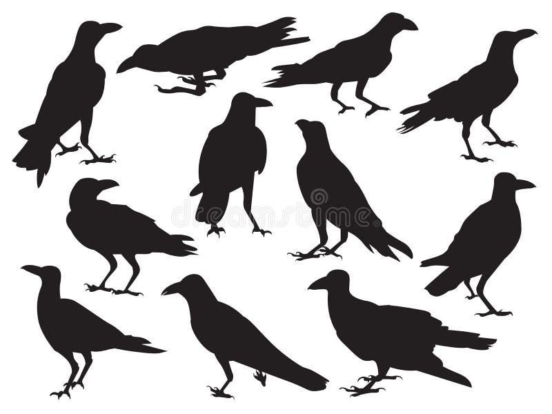 套在另外行动的白色背景隔绝的乌鸦现实象剪影阴影 库存例证
