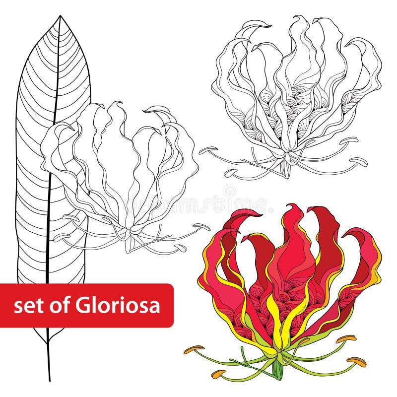 套在白色背景或火焰百合、热带花和叶子隔绝的Gloriosa superba 含毒植物 库存例证