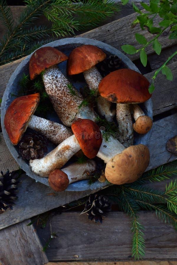 套在碗的红色盖帽牛肝菌蕈类在木背景 布朗狂放的蘑菇 可食的真菌Leccinum在森林里收集的Aurantiacum 免版税库存图片