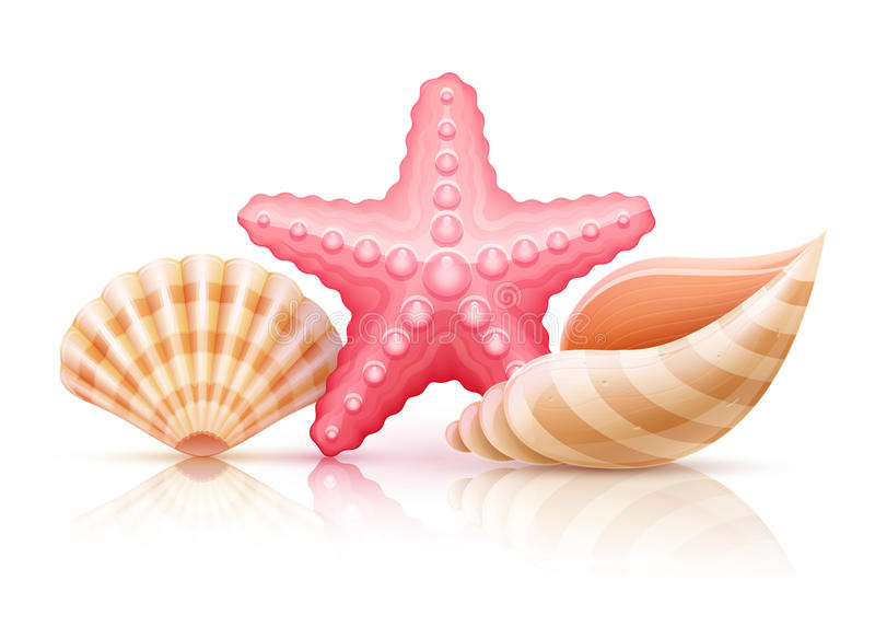 套夏天海壳和海星 向量例证
