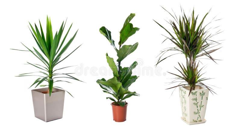 套室内植物 图库摄影