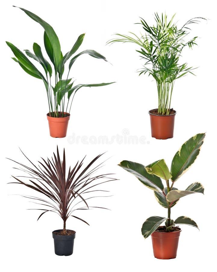套室内植物 库存图片