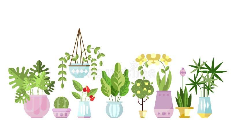 套平的在罐的站在队中样式五颜六色的室内植物 家庭装饰和落叶绿色植物 向量 皇族释放例证