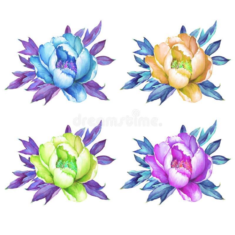 套开花的桃红色,蓝色,黄色牡丹牡丹,牡丹,芍药属 流行音乐艺术样式 皇族释放例证