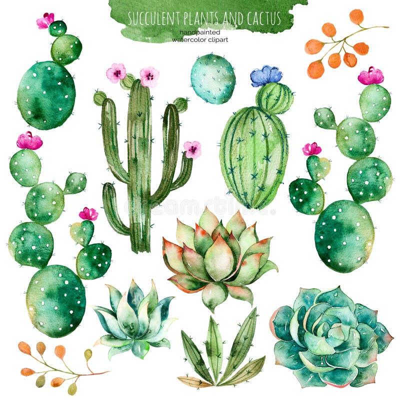 套您的设计的优质手画水彩元素与多汁植物,仙人掌和更多 皇族释放例证