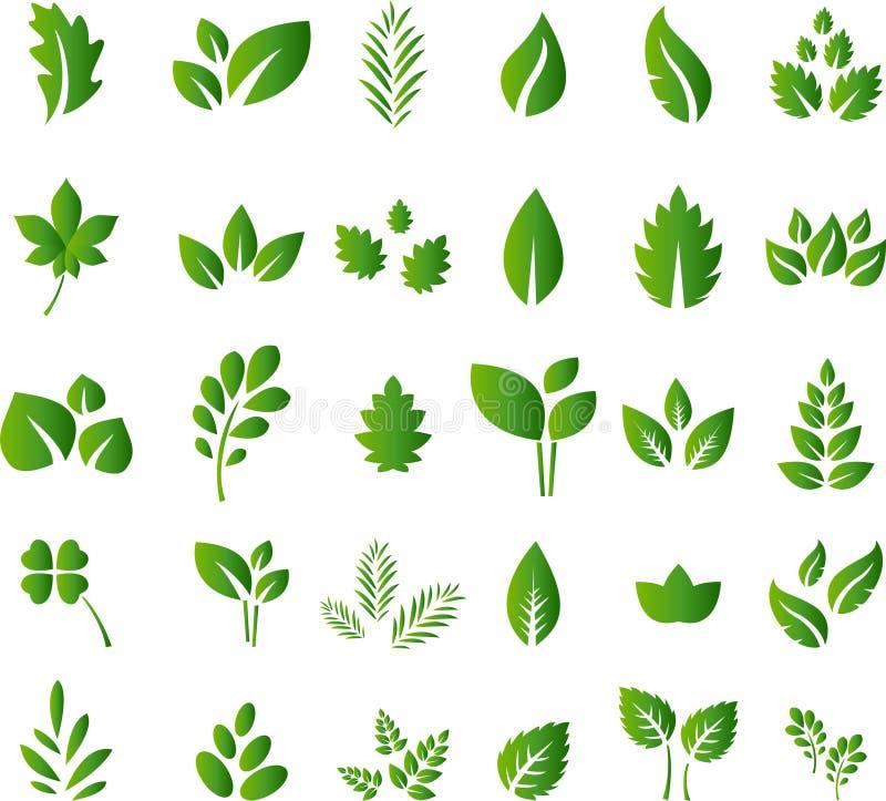 套您的绿色叶子设计元素设计 皇族释放例证