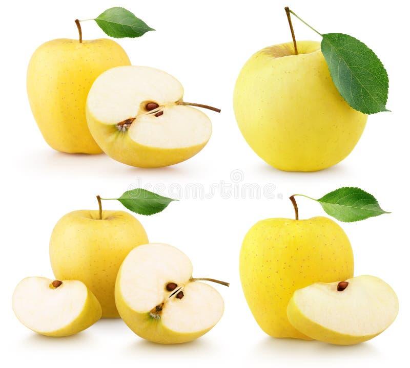 套成熟黄色苹果结果实与在白色的绿色叶子 库存照片